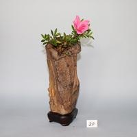 九十九島壷石[200620]
